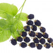 Blackberries berry concept — Foto Stock