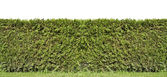 Fragment of a rural fence hedge — Stock Photo