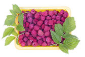 Real summer raspberries — Foto de Stock