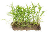 Real uncultivated field isolated fragment — Stock Photo
