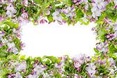 Pink spring apple tree flowers frame — Stock Photo