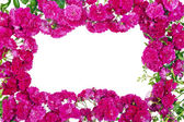 Pink roses frame isolated — Stock Photo