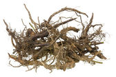 Roots for Halloween — Stock Photo