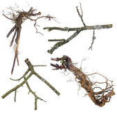 Branches and roots set for Halloween — Stock Photo
