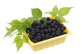 Blackberries in a yellow plastic container — Foto de Stock