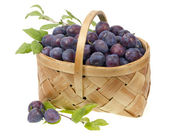 Blue plums in a wicker basket — Foto de Stock