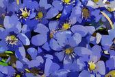 Verdadeiro primeiro europeu molas flores abstraem base — Fotografia Stock
