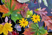 October, autumn leaves and plants in cold water — Stock Photo
