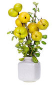 Minimalistic bouquet- Japanese Quince branches — Stock Photo