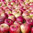 Red sweet apples in the grass — Stock Photo
