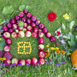 Stock Photo: Autumn harvest concept