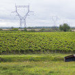 French vineyards landscape — Stock Photo