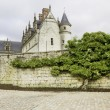 Old castle and tree — Stock Photo
