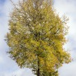 Sunny autumn tree on sky — Stock Photo
