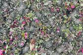 花卉背景-秋花和土壤 — 图库照片
