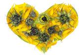 Abstract sunflowers heart — Stock Photo