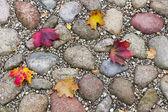 Maple herfstbladeren op straat — Stockfoto