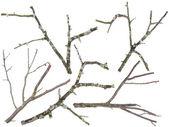 Ramas aisladas del árbol de las cerezas y manzana vieja — Foto de Stock