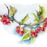 Red wild berries — Stock Photo #19972635