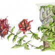 Two red roses  — Stock Photo