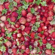 Forest Summer wild strawberries — Zdjęcie stockowe #19972701