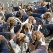 Stock Photo: Hunter hounds dogs background