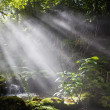 Stock Photo: Beams of sun in forest