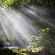 Beams of the sun in forest — Stock Photo