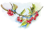Red wild berries — Stock Photo
