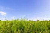 天空草地 — 图库照片