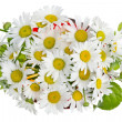 Minimalistic  bouquet  - white camomile flowers — Stock Photo