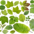 European plants leaves set — Stock Photo