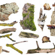Stock Photo: Set of isolated forest elements