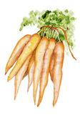 Zanahoria ecologica — Foto de Stock