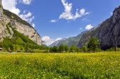 Summer Alpine rural landscape — Stock Photo