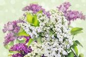 白色和紫色,淡紫色背景 — 图库照片
