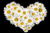 Beating real daisies heart — Stock Photo