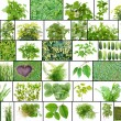 Only green color plants — Stock Photo #30081419