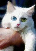 Bílá kočka na ruce — Stock fotografie