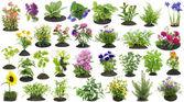 Garden plants grow in soil set — Stock Photo