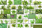 Only green color plants — Stock Photo
