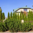 Green fence of trees and shrubs — Stock Photo