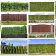 Fragments of a green hedge set — Stock Photo