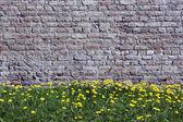 Old yellow bricks wall and dandelions — Stock Photo