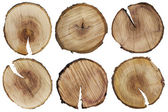 Round cuts of a tree trunk — Stock Photo