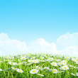 Summer or spring shiny meadow Background. — Stock Photo