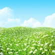 Summer shiny colorful meadow Background. — Foto de Stock