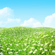 Summer shiny colorful meadow Background. — 图库照片