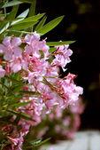 Flowers in the botanic garden — Stock Photo