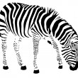 Zebra — Stock Vector #21250531